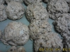 Bolinhos com cereais interegrais