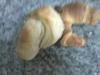 Croassants de Baunilha